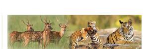 Corbett national park tour is full of wild life tour package