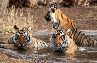 Jim Corbett Package Tour